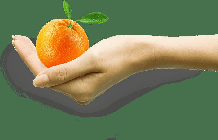 Orange in Hand - Unser Fazit zu Obst und Kohlenhydraten